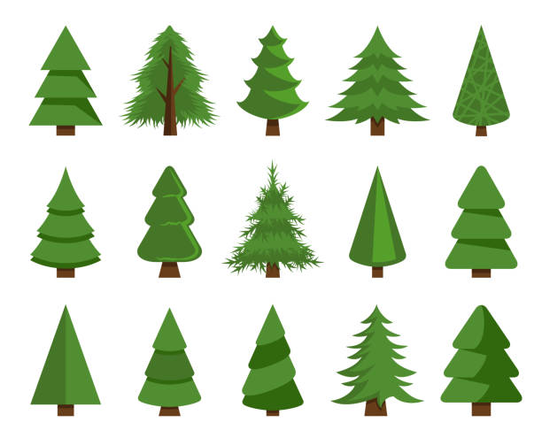 Christmas trees vector set stock illustration Vector illustration of the christmas trees set pine tree stock illustrations