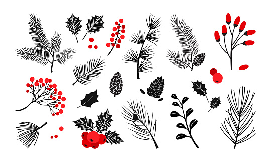 Christmas vector plants, holly berry, christmas tree, pine, leaves branches, holiday decoration, winter symbols. Red and black colors. Vintage nature illustration