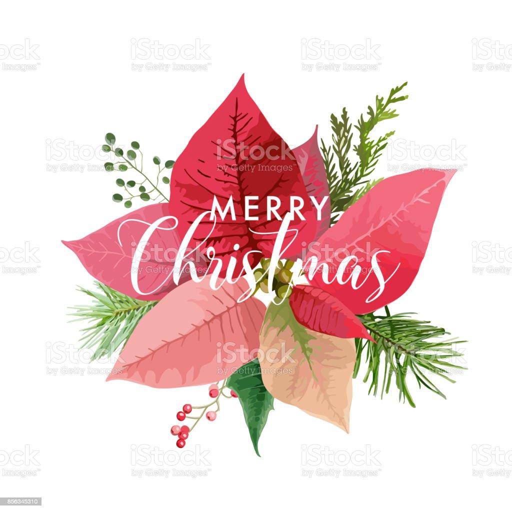 Weihnachtskarte Winter Weihnachtsstern Blume Oder Hintergrund Mit ...