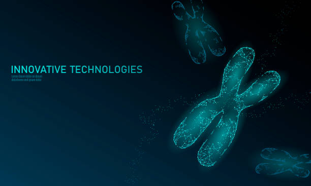 Chromosome DNA structure medicine concept. Low poly polygonal triangle gene therapy cure genetic disease. GMO engineering CRISPR Cas9 innovation modern technology science banner vector illustration Chromosome DNA structure medicine concept. Low poly polygonal triangle gene therapy cure genetic disease. GMO engineering CRISPR Cas9 innovation technology science banner vector illustration art chromosome stock illustrations