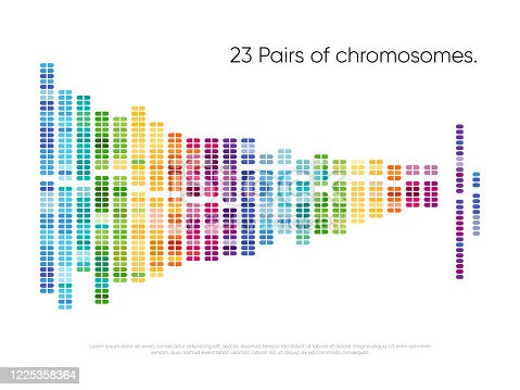 istock Chromosomes pairs. Structure of DNA genome set 1225358364