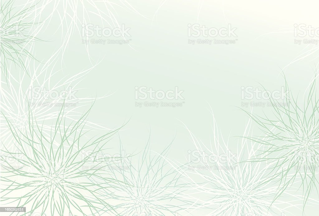 Chrysanthemum floral background royalty-free stock vector art