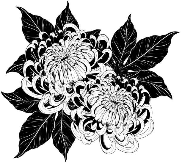 illustrations, cliparts, dessins animés et icônes de fleur de chrysanthème à la main de dessin - tatouages de fleurs