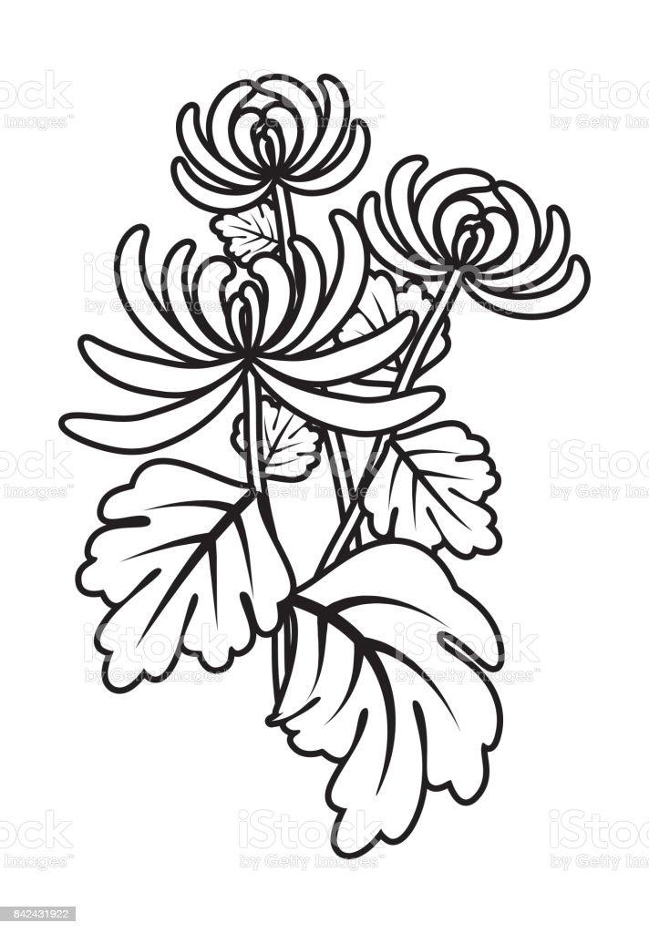 Ilustración de Esquema De Flor De Crisantemo y más banco de imágenes ...
