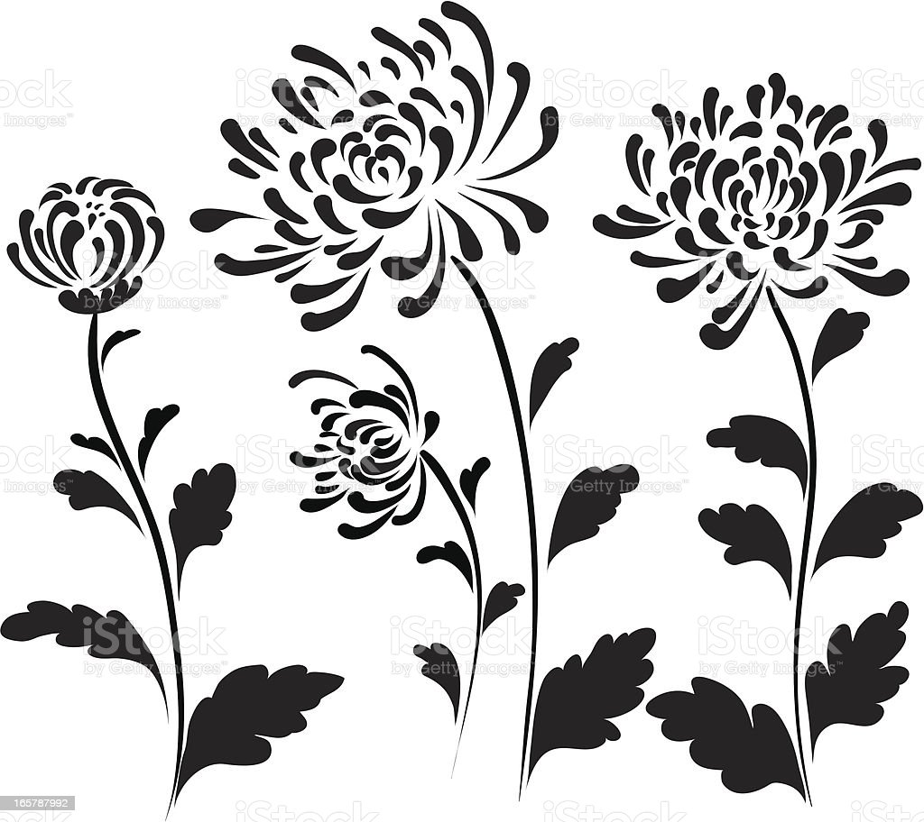 royalty free chrysanthemum clip art vector images illustrations rh istockphoto com clipart chrysanthemum flowers chrysanthemum mouse clip art