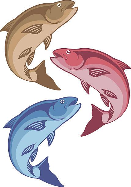 chub fish - redfish stock illustrations, clip art, cartoons, & icons