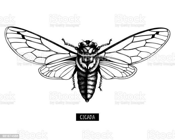 Cicada 2 vector id931674588?b=1&k=6&m=931674588&s=612x612&h=oe uegi9allcoh6czldihvxpyektg7v mamkpv iq9e=