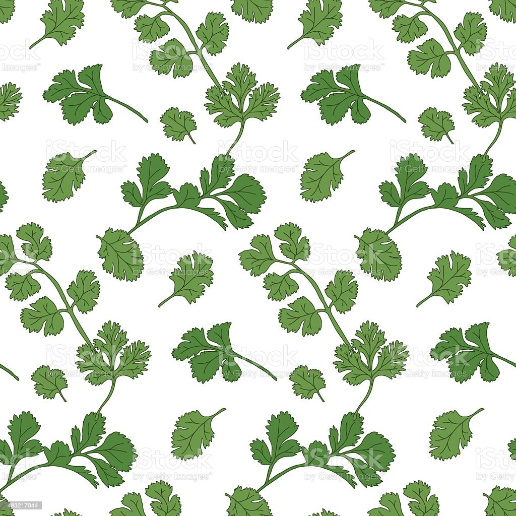 Cilantro Pattern Stock Vector Art & More Images of 2015 483217044 ...