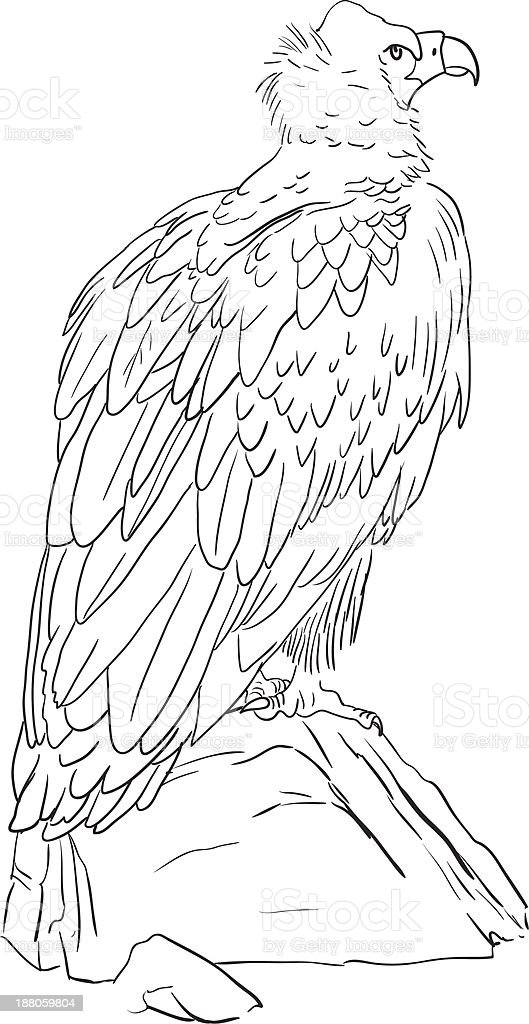 Cinereous Vulture royalty-free stock vector art
