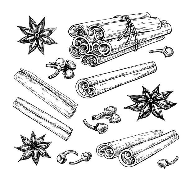 ilustraciones, imágenes clip art, dibujos animados e iconos de stock de canela en rama había atado manojo, estrella de anís y clavo de olor. dibujo vectorial. boceto dibujado de la mano. - clavo especia