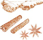 Cinnamon sticks, ginger, anise isolated white background, hand drawn sketch vector decorative graphic texture spice, food ingredient for healthy market, restaurant menu, cosmetics, harvest