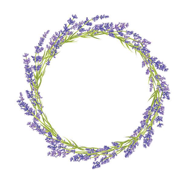 illustrazioni stock, clip art, cartoni animati e icone di tendenza di cerchio di fiori di lavanda - colore lavanda