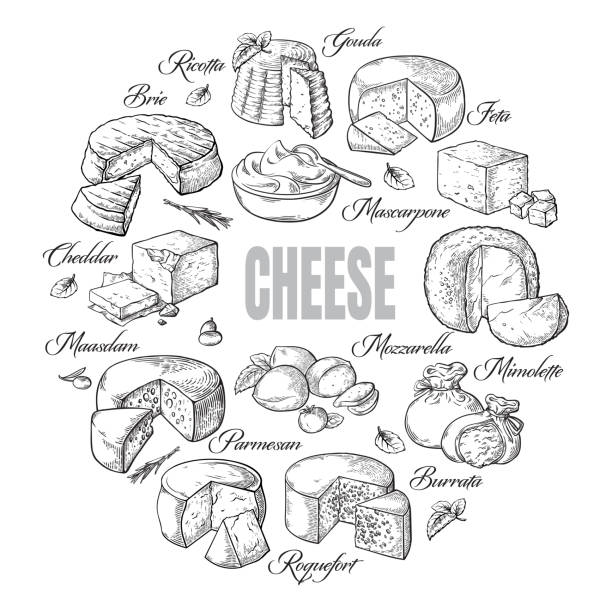 circular background of different cheese top view circular background of different cheese top view Vector illustration mozzarella stock illustrations