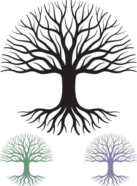 kreisförmige struktur-vektor-illustration - stammbäume stock-grafiken, -clipart, -cartoons und -symbole
