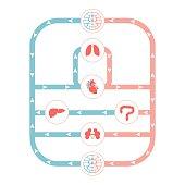 circulatory system,