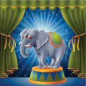 Circus Elephant on the Stage