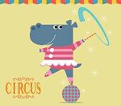 Circus show with Hippopotamus
