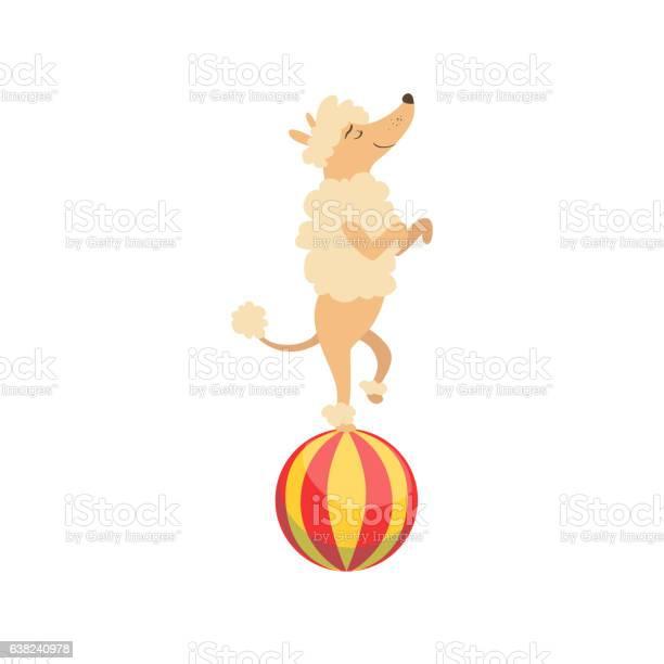 Circus trained poodle dog animal artist performing vector id638240978?b=1&k=6&m=638240978&s=612x612&h=o4j mkzad7agu f0 fbhnlg6ozqz37r7s j7tgyr2ig=