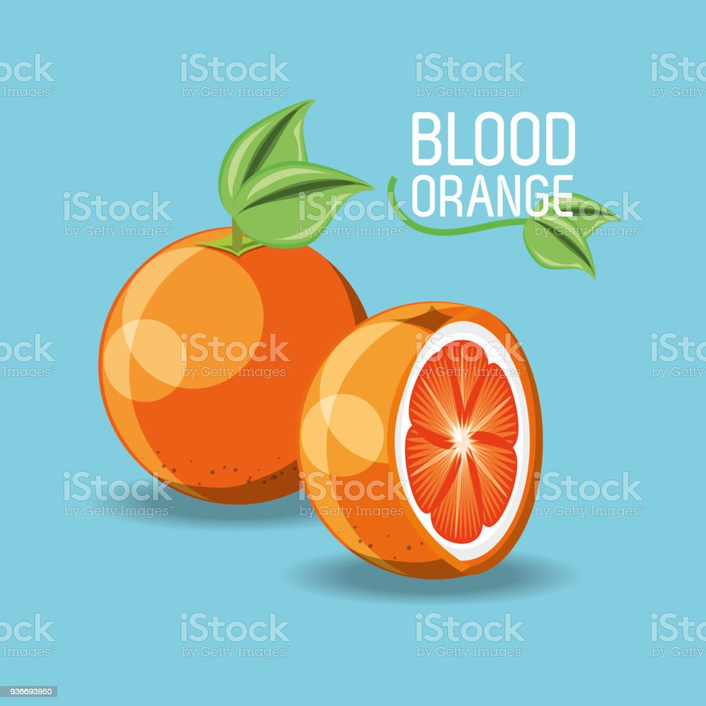 citric fruits design vector art illustration