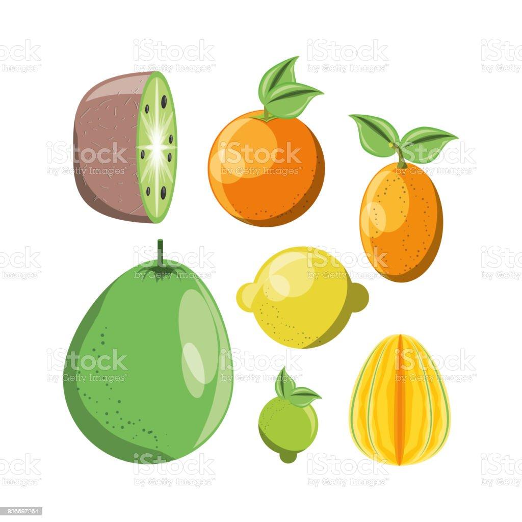 citric fruits design vector art illustration