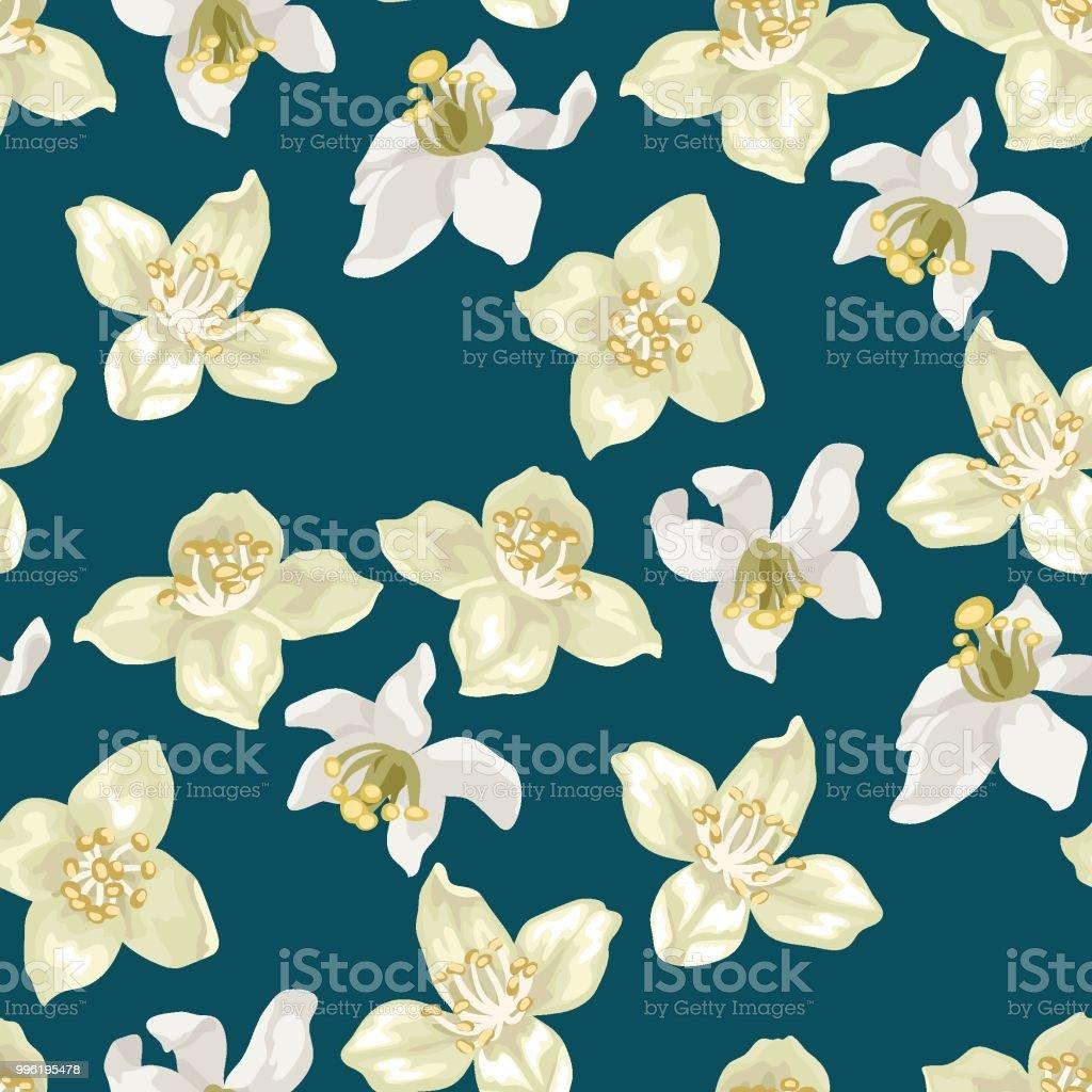 Royalty Free Jasmin Fleur Clip Art Vector Images Illustrations