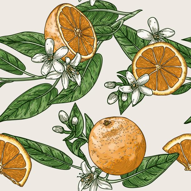 ilustrações de stock, clip art, desenhos animados e ícones de citrus and orange blossom vintage retro style seamless pattern - orange