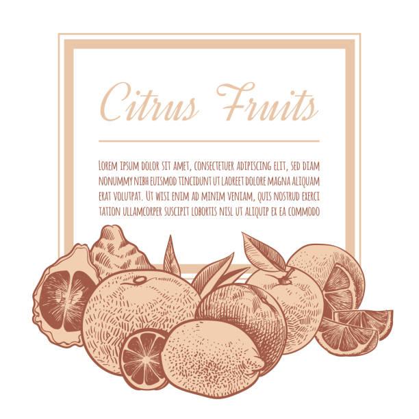illustrations, cliparts, dessins animés et icônes de fond d'agrumes. des oranges à croquis dessinées à la main, des agrumes exotiques griffonnés. conception d'affiche de vecteur de citrons, de pamplemousse et de lime - infusion pamplemousse