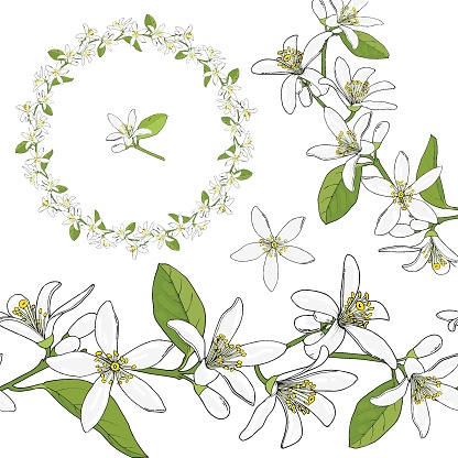 Citrus flowers wreath. Round floral garland with citrus flowers. Hand drawn color vector illustration isolated on white background.