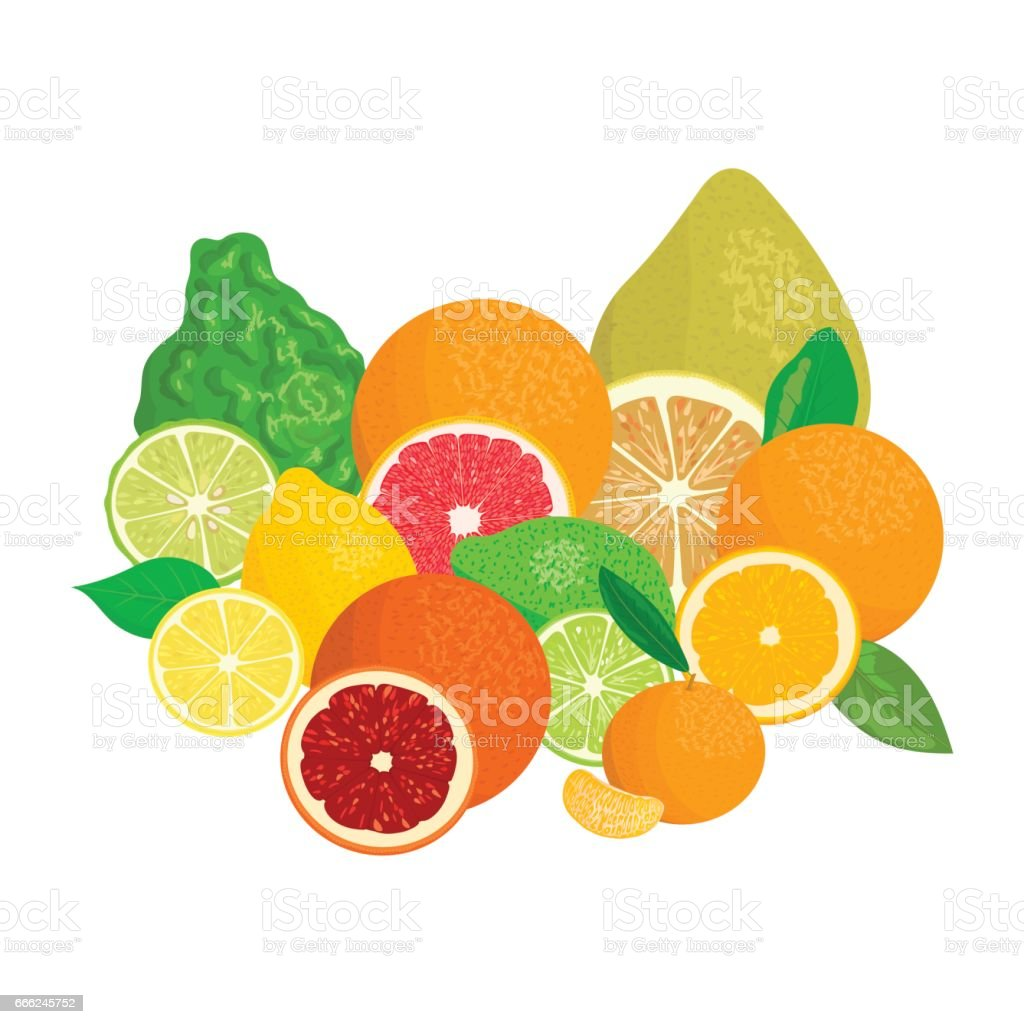 Citrus fruits. Bergamot, lemon, grapefruit, lime, mandarin, pomelo, orange, blood orange with slices vector art illustration
