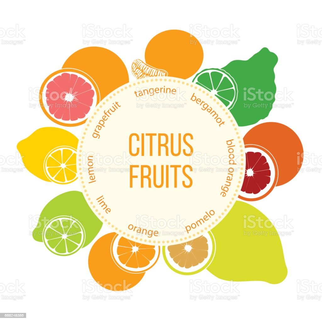 Citrus fruits flat set. Bergamot, lemon, grapefruit, lime, mandarin, pomelo, orange, blood orange with slices vector art illustration