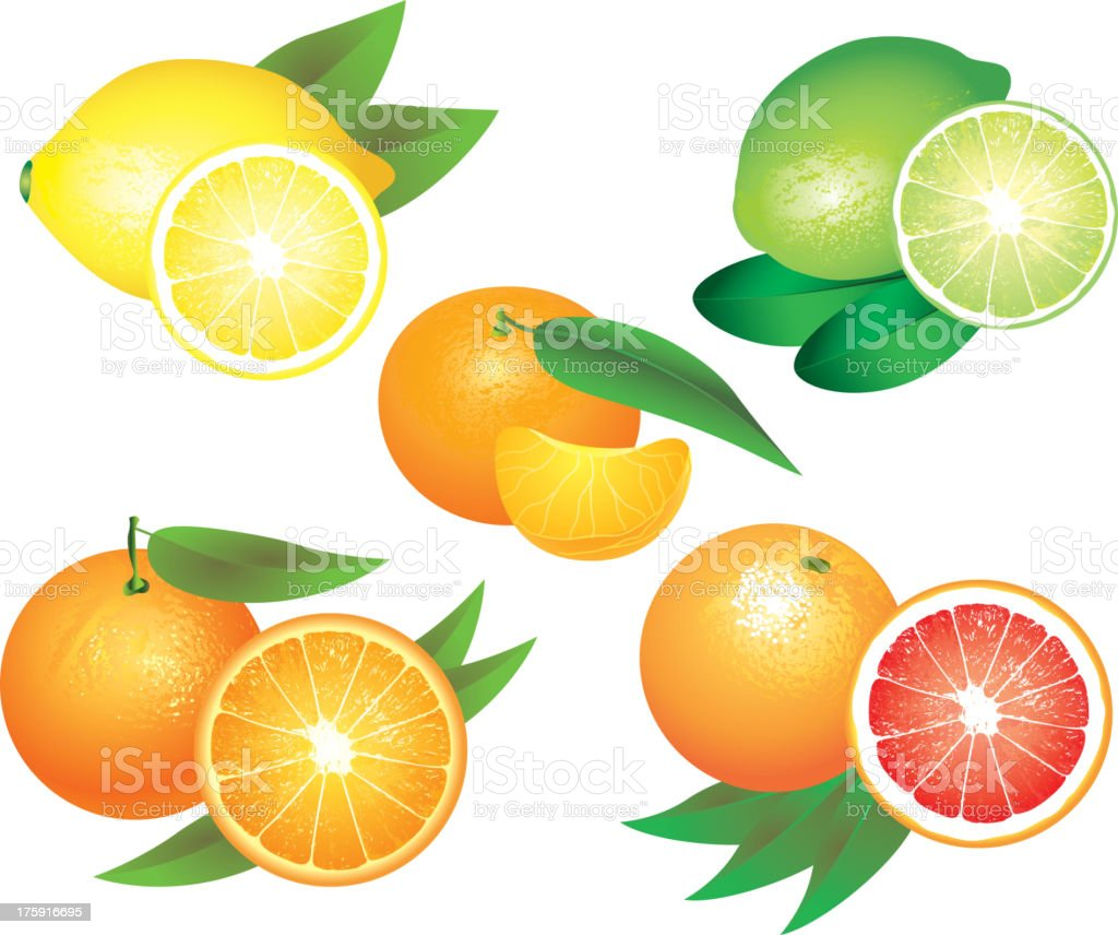 Citrus fruits photo-realistic set vector art illustration