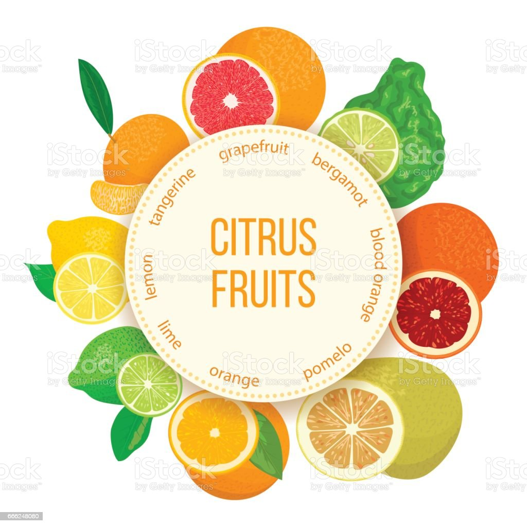 Citrus fruits set. Bergamot, lemon, grapefruit, lime, mandarin, pomelo, orange, blood orange with slices vector art illustration