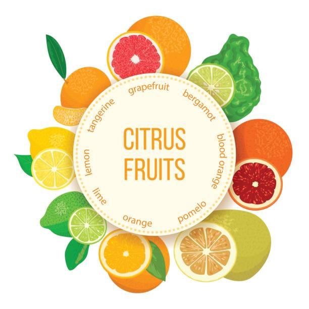 Citrus fruits set. Bergamot, lemon, grapefruit, lime, mandarin, pomelo, orange, blood orange with slices vector art illustration