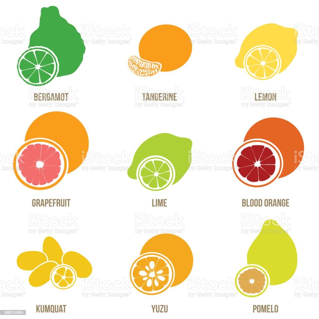 Citrus fruits vector flat set, whole fruits and slices vector art illustration
