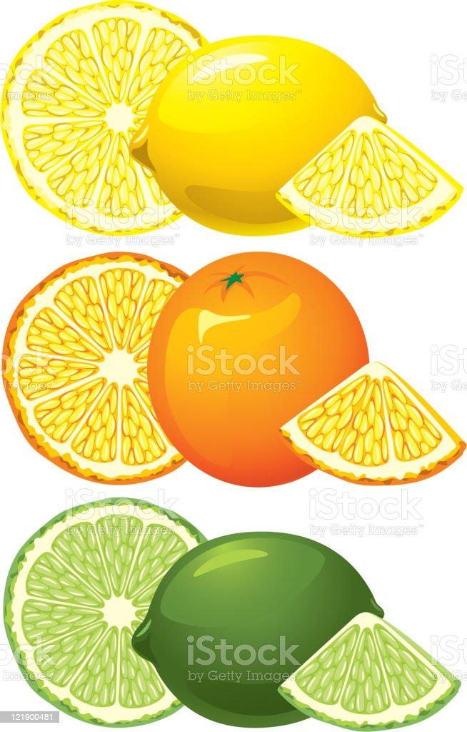 Citrus fruits royalty-free citrus fruits stock vector art & more images of acid