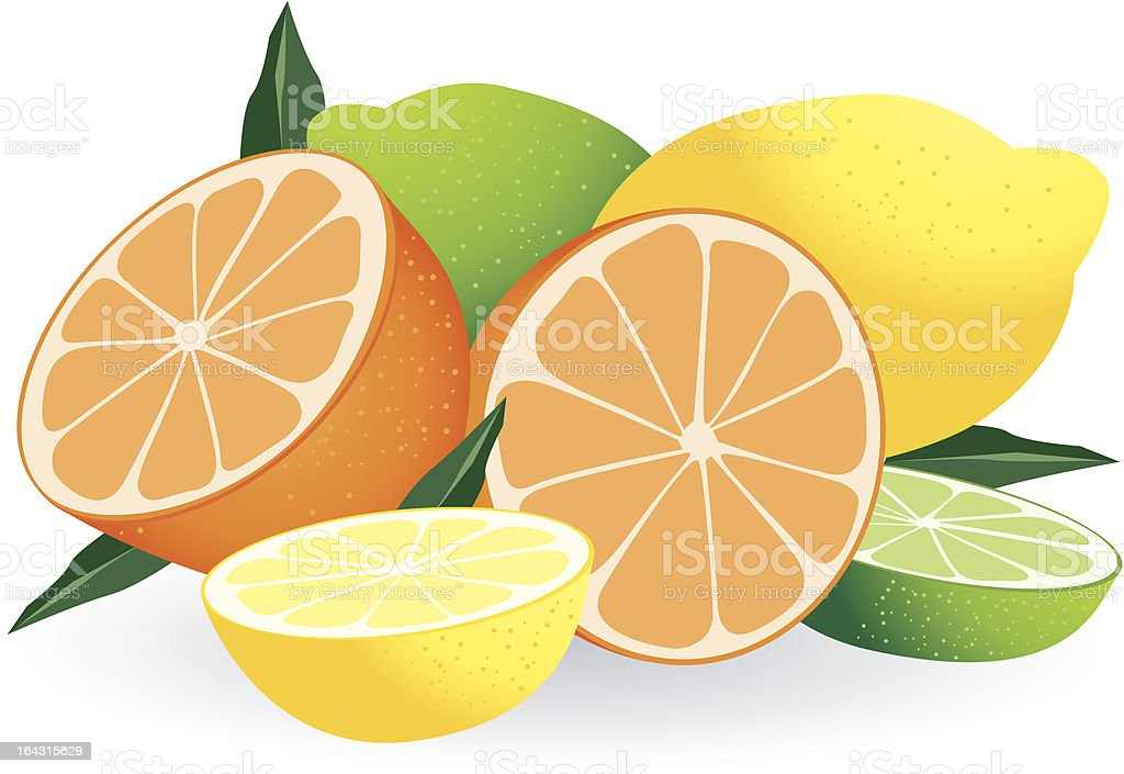 Citrus Fruits royalty-free stock vector art