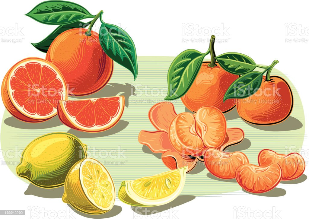 citrus fruits vector art illustration