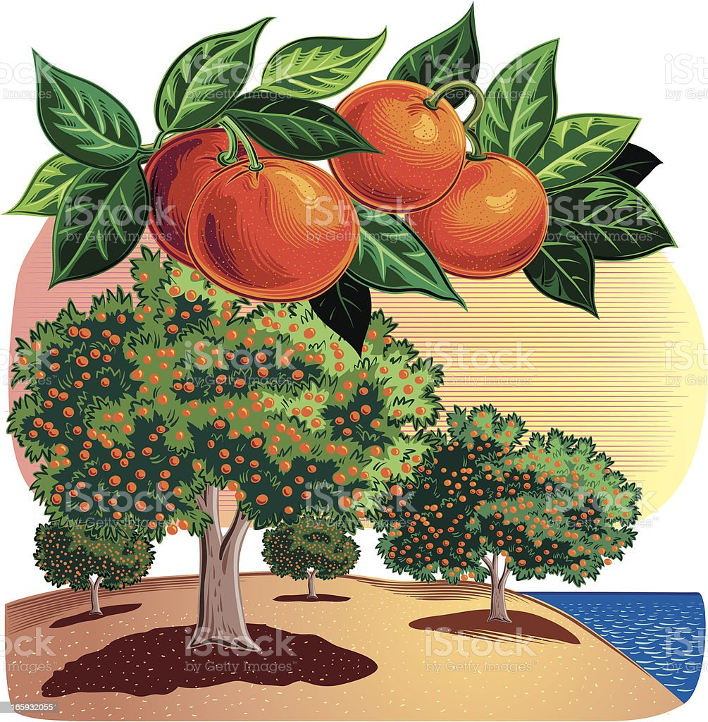 citrus Grove vector art illustration