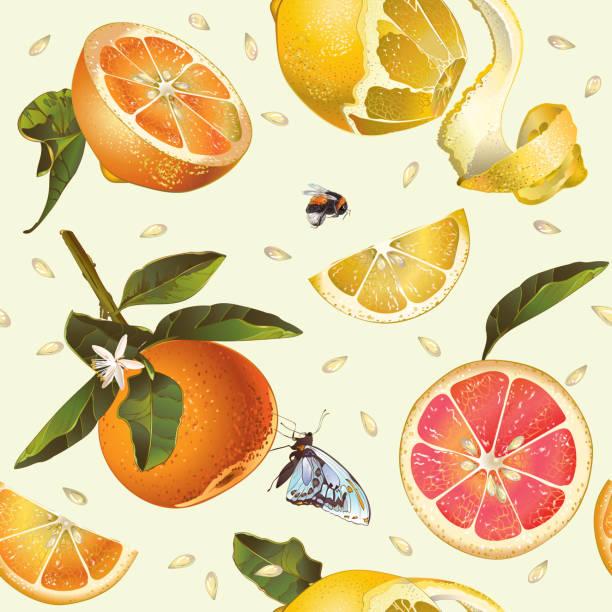 illustrations, cliparts, dessins animés et icônes de citrus motif sans couture. - infusion pamplemousse