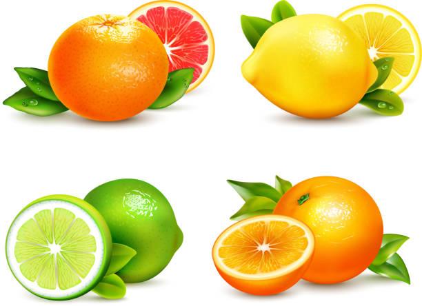 ilustrações de stock, clip art, desenhos animados e ícones de citrus set - orange