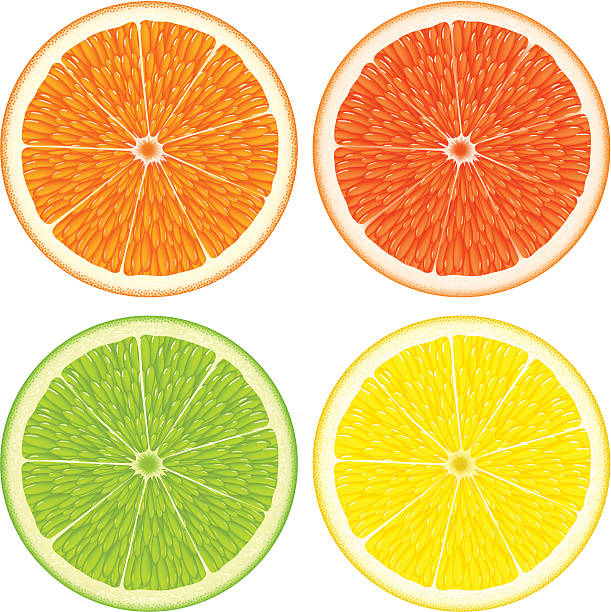 Citrus slices vector art illustration