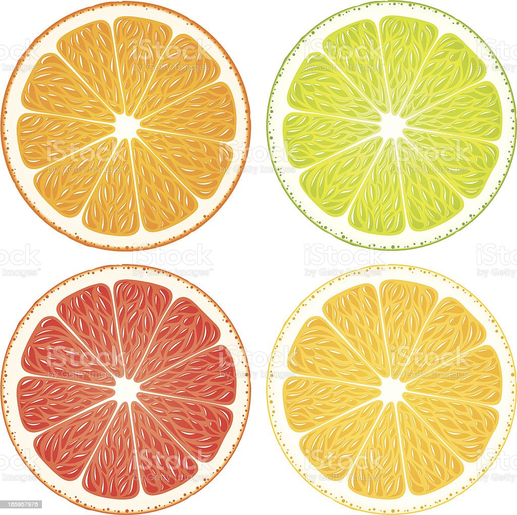 Citrus Slices vector art illustration