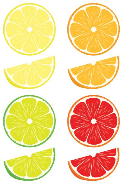 Citrus slices vector set Orange, lemon, lime, blood orange slices isolated on white background lemon fruit stock illustrations