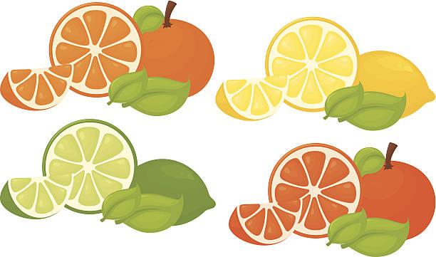Citrus Splash vector art illustration