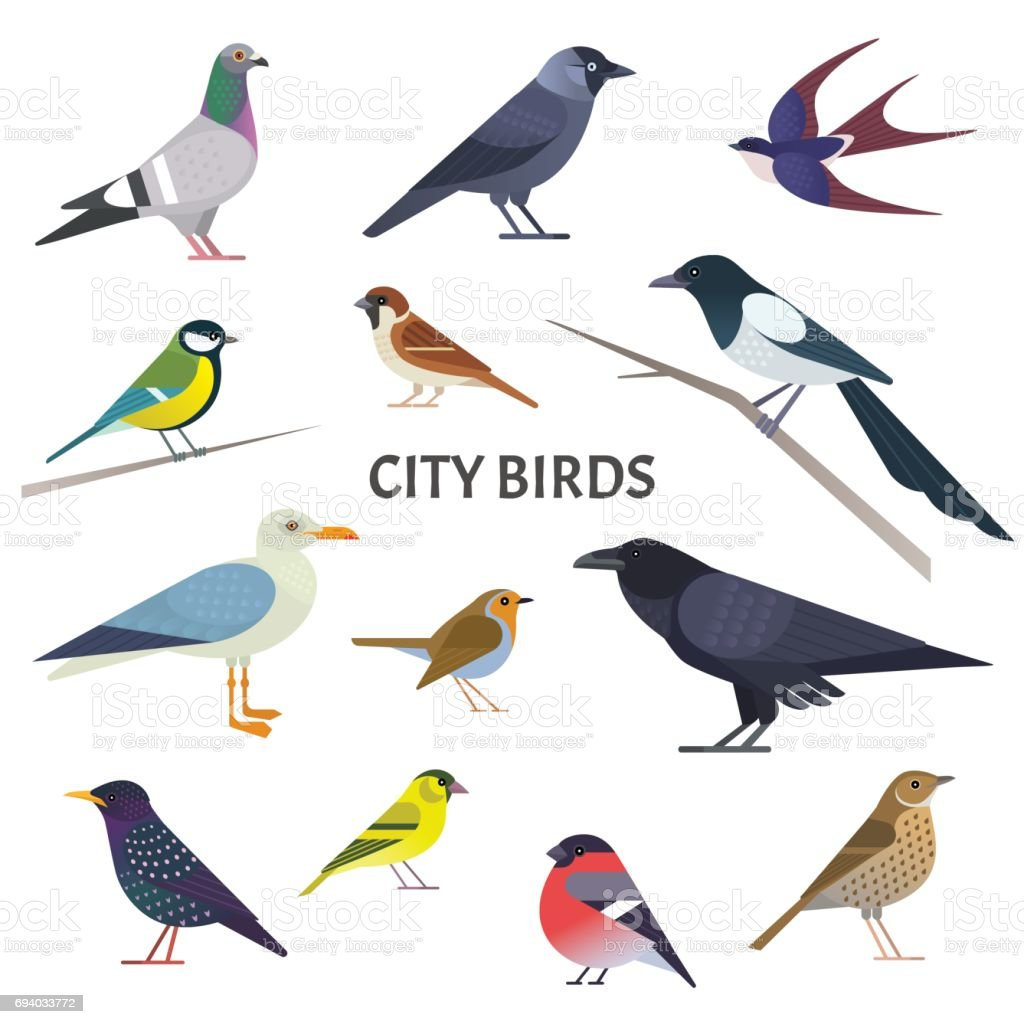 City birds. vector art illustration