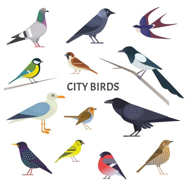 city birds. - birds stock illustrations