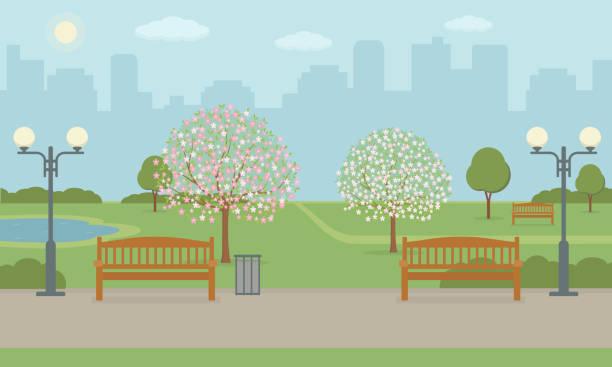 illustrazioni stock, clip art, cartoni animati e icone di tendenza di city park with benchs, lawn and blooming trees. - sfondo paesaggi