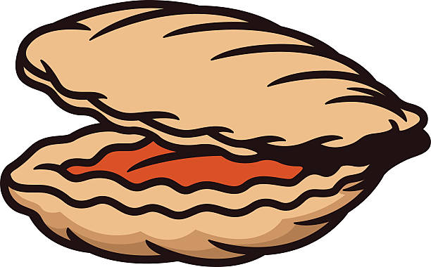 Best Open Clam Shell Illustrations, Royalty-Free Vector ...