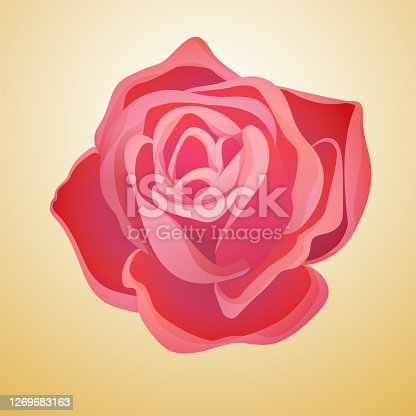 istock Classic blooming red rose bud 1269683163