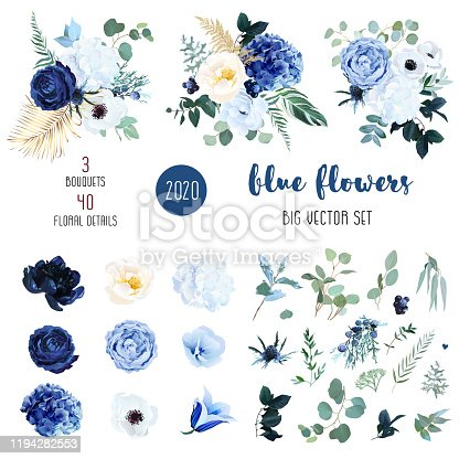 Classic blue, white rose, white hydrangea, ranunculus, campanula, anemone, peony, thistle flowers,greenery and eucalyptus,berry, juniper big vector set.Trendy color collection. Isolated and editable